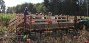 Pumpkin Patch Wagon Rides