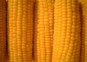 Bose Farms Produce