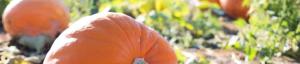 Surrey Pumpkin Patch